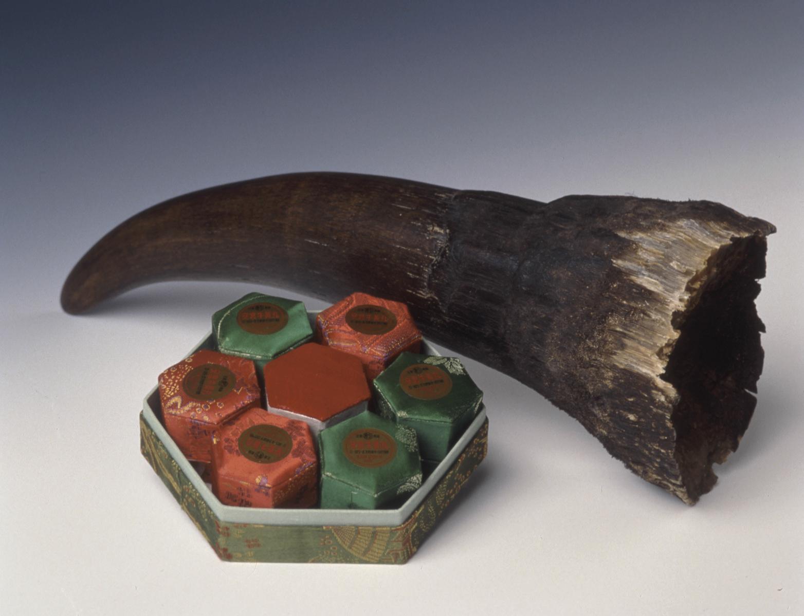 rhino horn medicine by IFAW