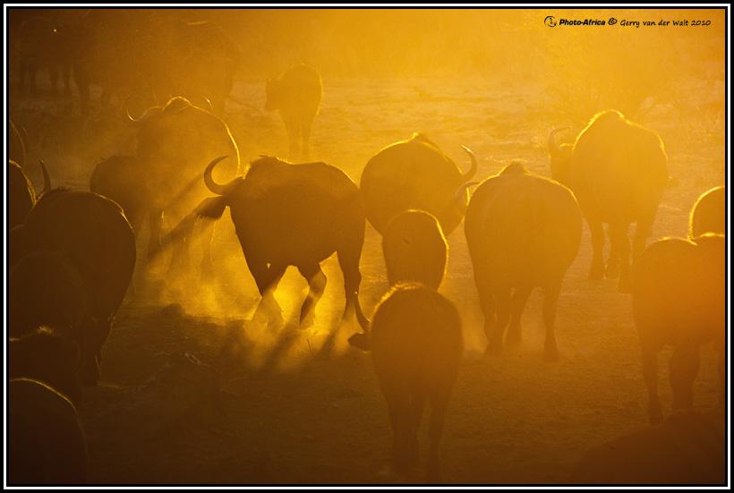 Image © Gerry van der Walt