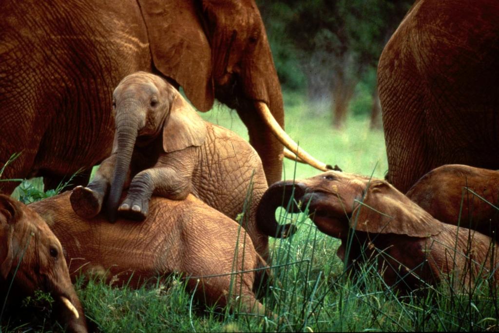 EIA_Young_Elephants_01