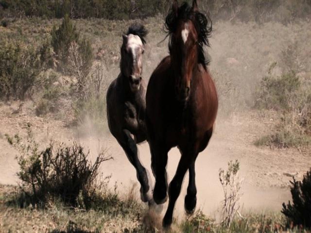 Stallions Fight b3