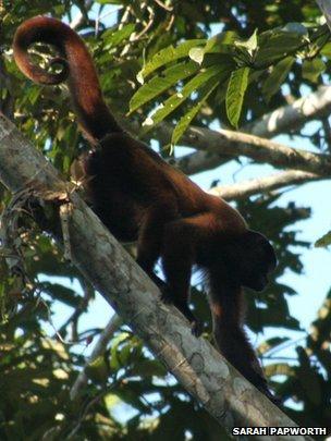 Amazing Discovery: Monkeys can identify human hunters