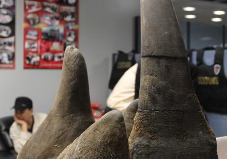 rhinoivory6