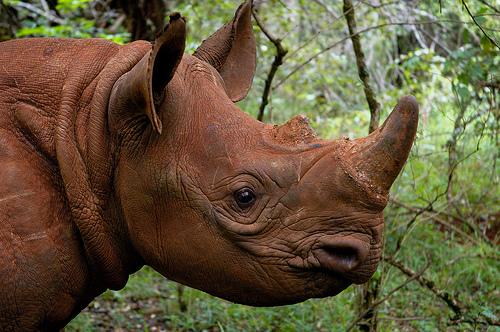 Angola Rhino News