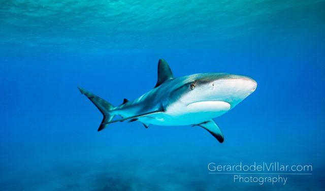 Fotografias de especies marinas