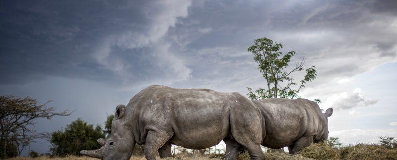 Biodiversity Archives | BUSH WARRIORS